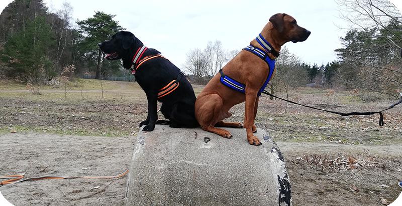 Fit mit Bella: Fitnessübungen für Hunde