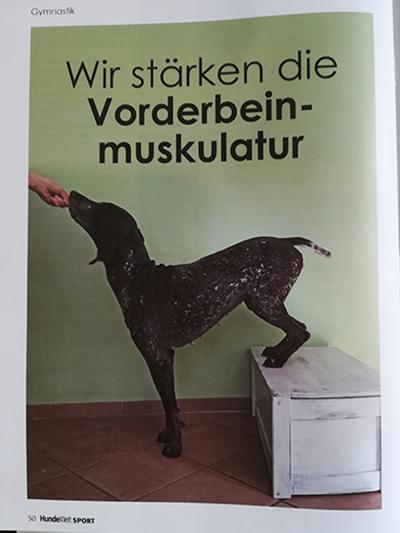 HundeWelt-Sport: Wir stärken die Vorderbeinmuskulatur