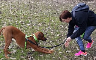 """Hundeübung zum Dehnen """"Diener"""""""